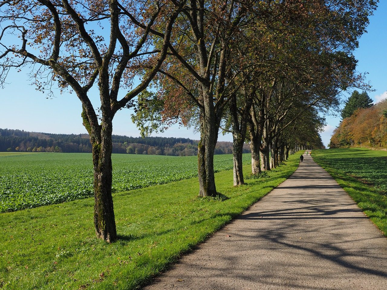 Baumfällungen an Kreisstraßen — Grüne Kreistagsfraktion fordert Nachpflanzungen